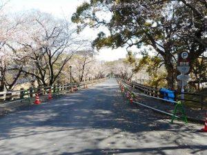 熊本城 桜