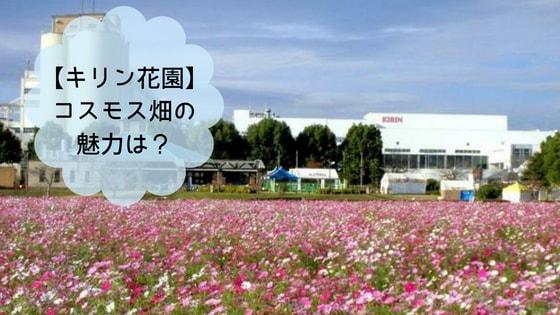 【キリン花園】コスモス畑の魅力は?