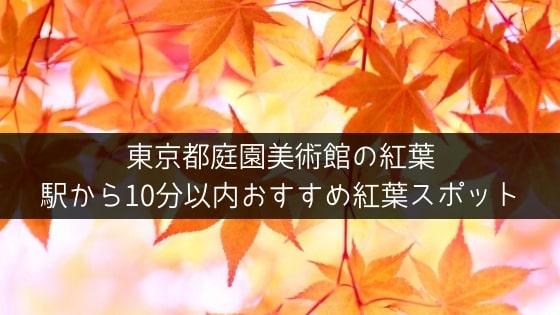 【東京都庭園美術館の紅葉】駅から10分以内 おすすめ紅葉スポット