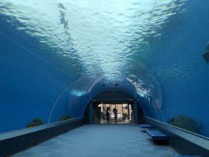 【八景島シーパラダイス】4つの水族館を効率よくまわるおすすめガイド