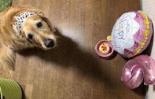 犬用ケーキ通販【コミフ】口コミ〜人間も食べれる?